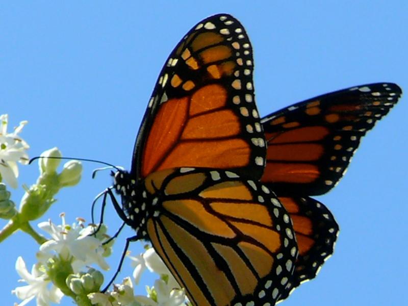 Притча про дивних метеликів