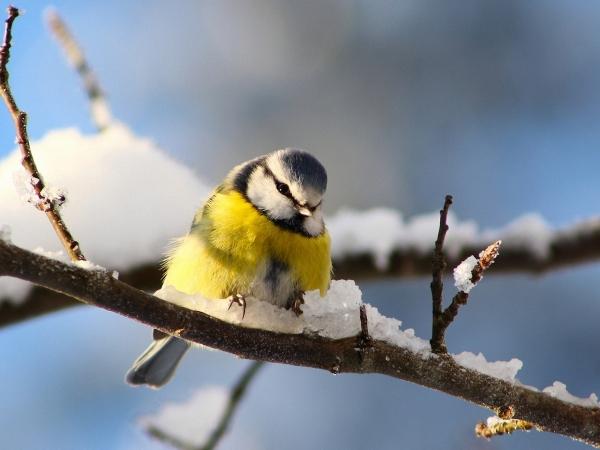 Вдячна пташка