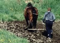 Фермер оре конем