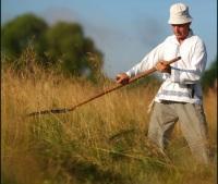 Косить пшеницю